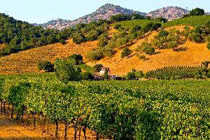 Les vallées viticoles , La Napa Valley , Etats-Unis