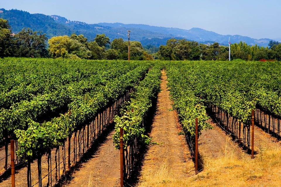 Californian vineyards, Wine-growing valleys, Landscapes, California