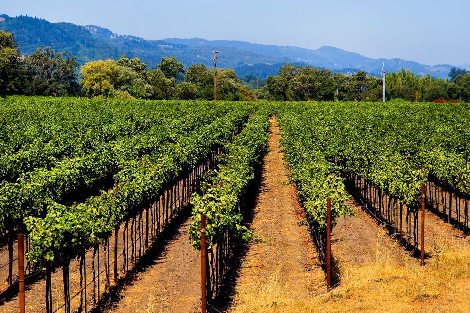 Vignes californiennes, Les vallées viticoles, Les paysages, Californie