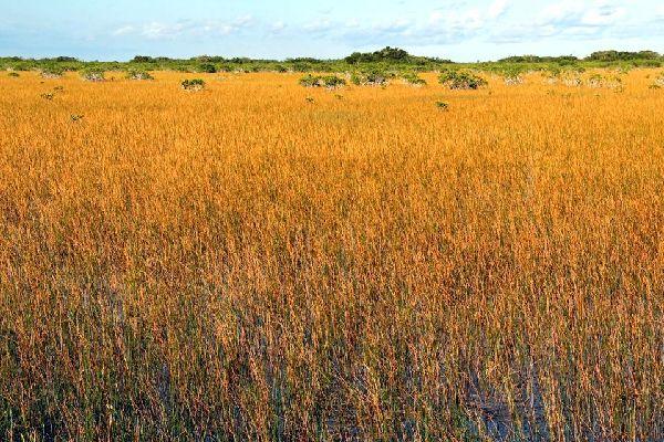 Die Landschaften im Süden , Der Süden von Florida: die Städte , USA