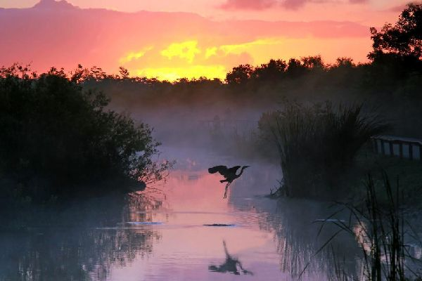 The Everglades , The Everglades National Park, South Florida , United States of America