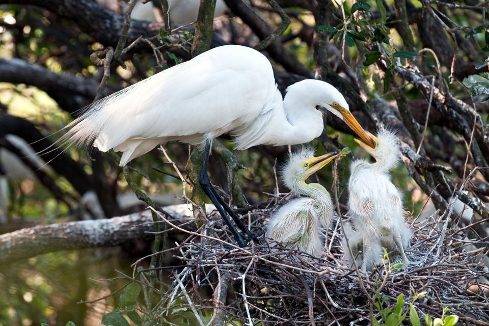 Les Everglades , Zone humide en Floride , Etats-Unis