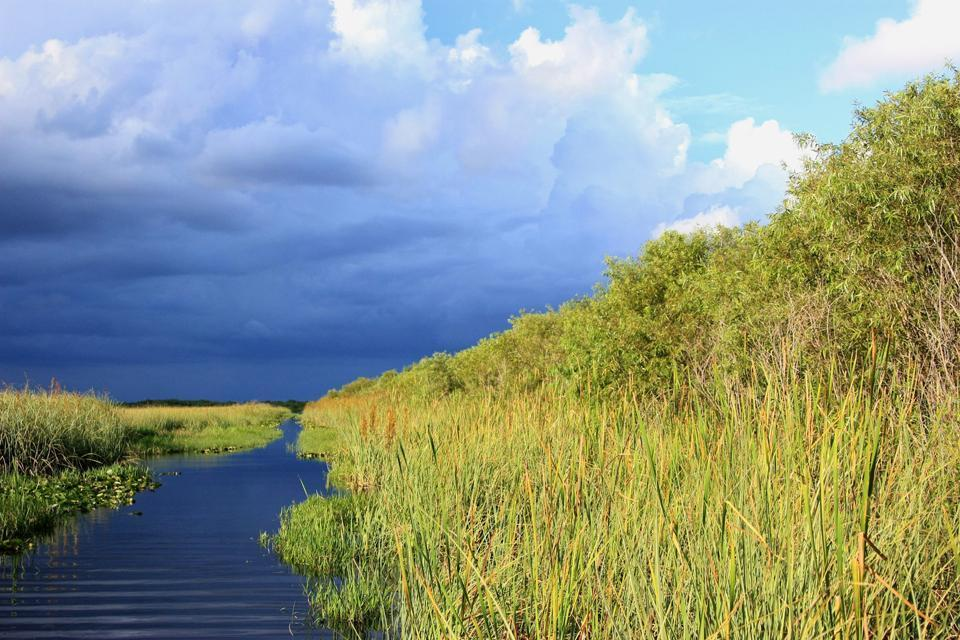 The Everglades , The alligators of the Everglades, Florida , United States of America