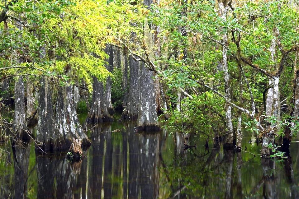 Big Cypress National Reserve , United States of America