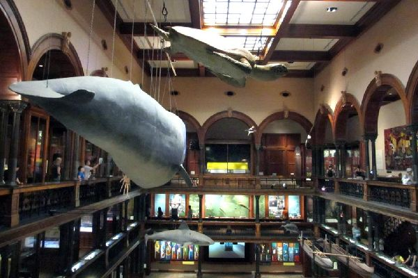 Bishop Museum (Oahu) , United States of America