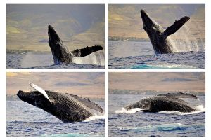 , Le Whale Center of the Pacific (Maui), Les arts et la culture, Hawaï