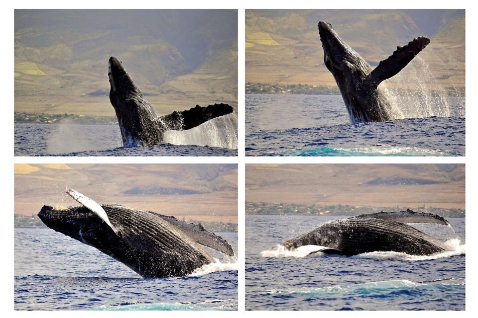 , The Whale Center of the Pacific (Maui), Arts and culture, Hawaii