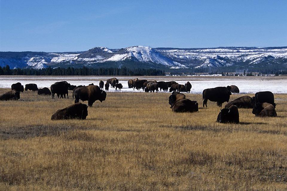 Wyoming , Yellowstone National Park, Wyoming , United States of America