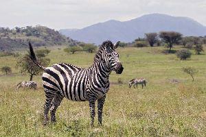 El gran valle del Rift , El Valle del Rift, Etiopía , Etiopía