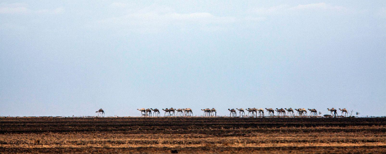 Le désert de Denakil , Le désert Danakil, Éthiopie , Ethiopie