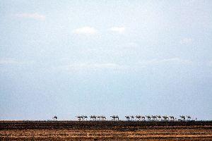 El desierto de Denakil , El desierto Danakil, Etiopía , Etiopía