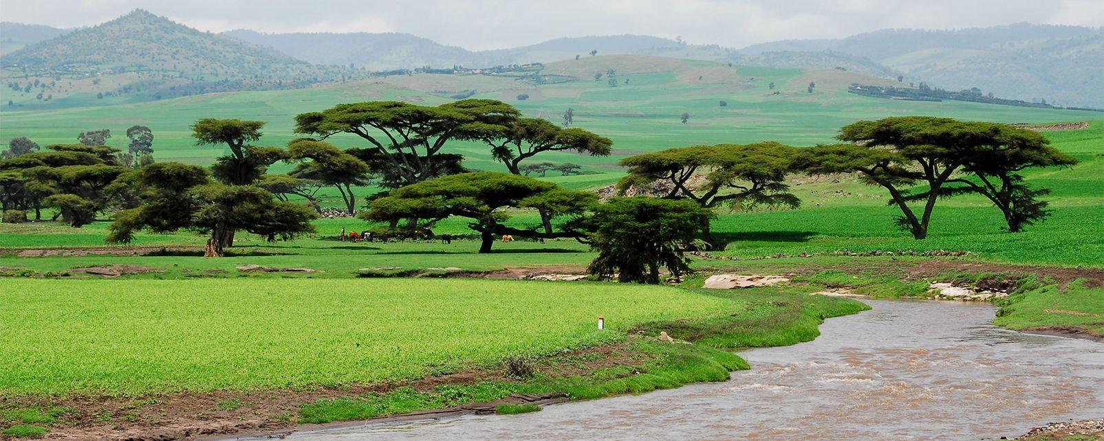 National Parks , Bale Mountains National Park, Ethiopia , Ethiopia