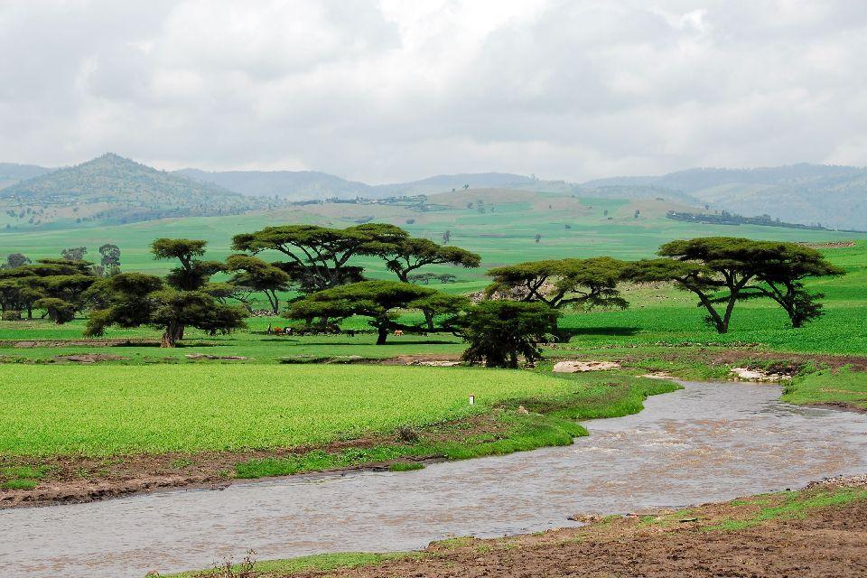 Les Parcs nationaux , Le parc du Balé, Éthiopie , Ethiopie