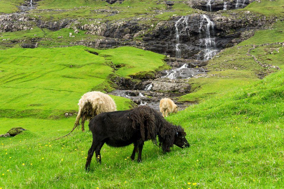 Randonnée dans l'île de Streymoy , Torshavn , Iles Féroé