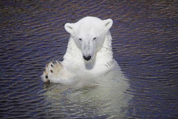 Die Tierwelt , Finnland