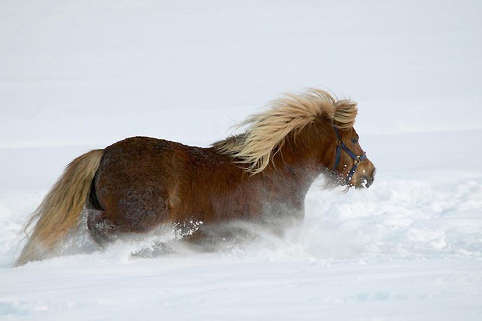Wildlife , Finland