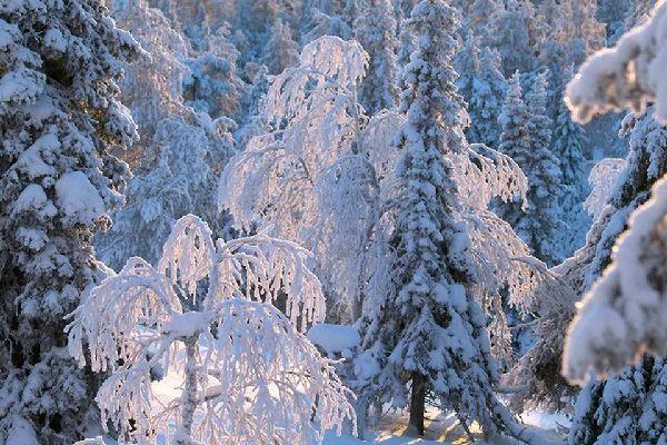 Le foreste , Finlandia