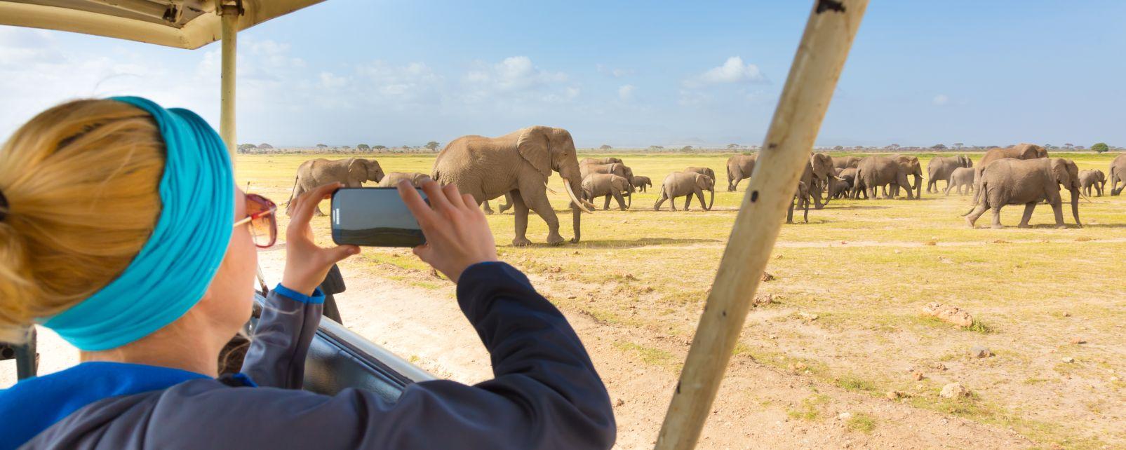 Les paysages, Lopé, gabon, réserve, parc, afrique, éléphant, animal, faune, mammifère