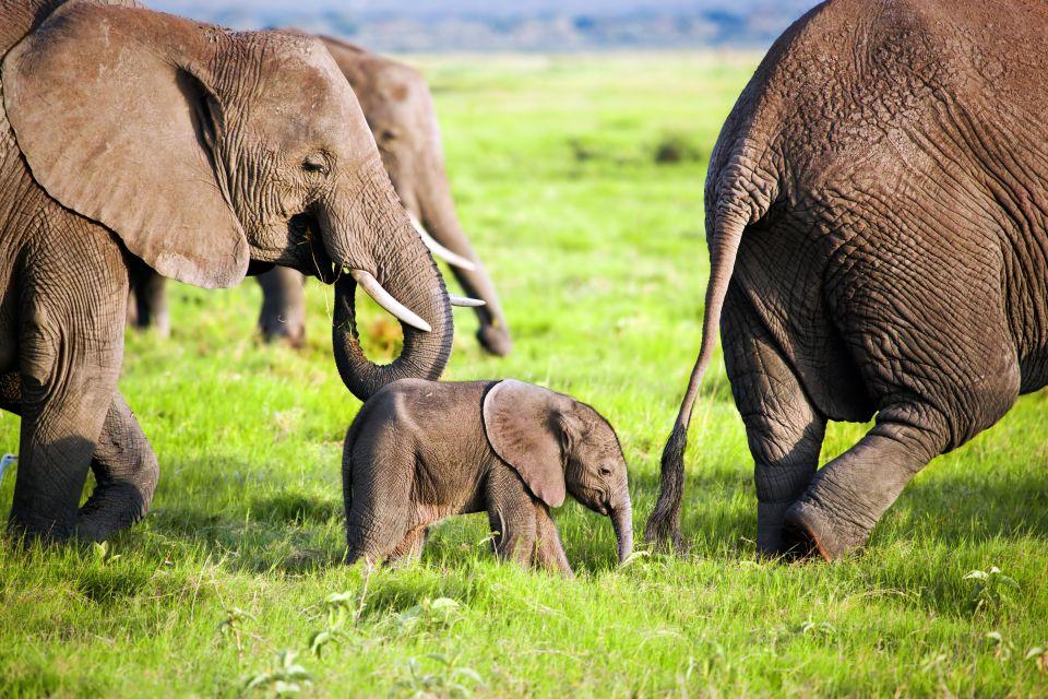 Les paysages, Lop?, gabon, r?serve, parc, afrique, ?l?phant, animal, faune, mammif?re