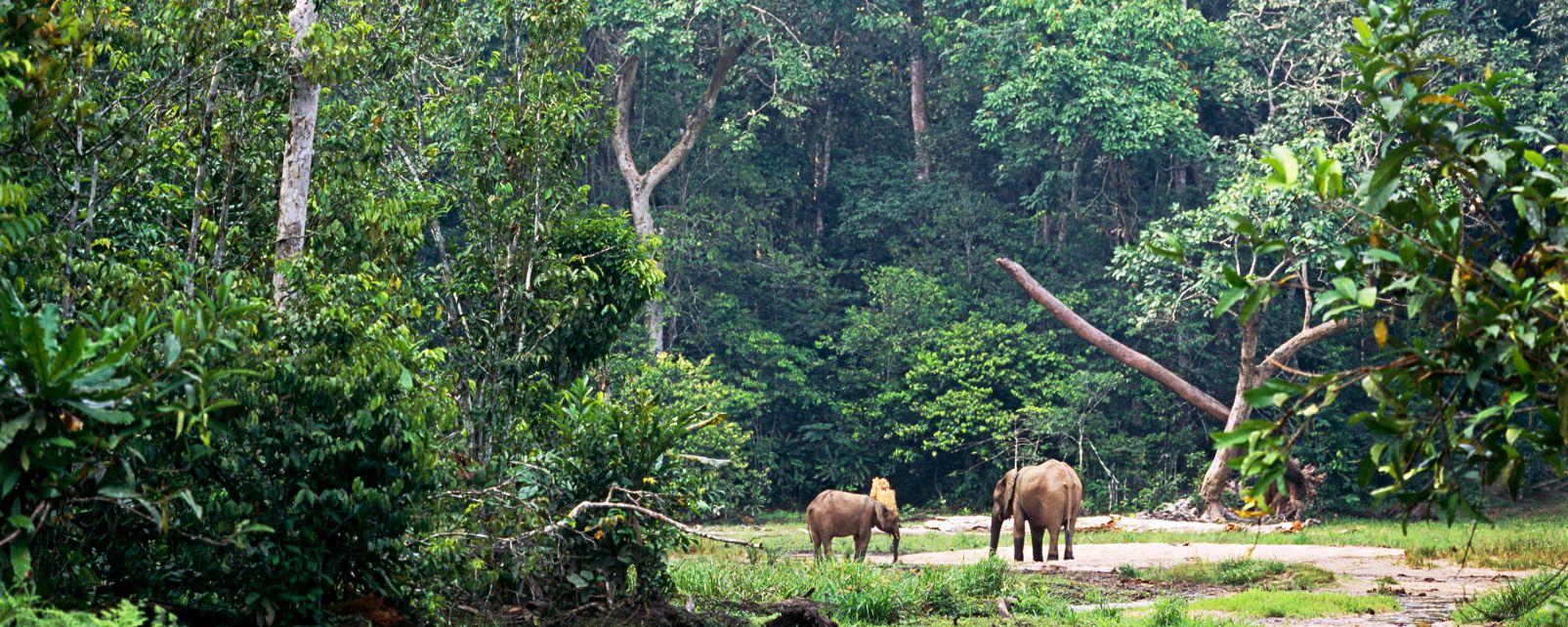 La faune et la flore, forêt, gabon, afrique, équatoriale