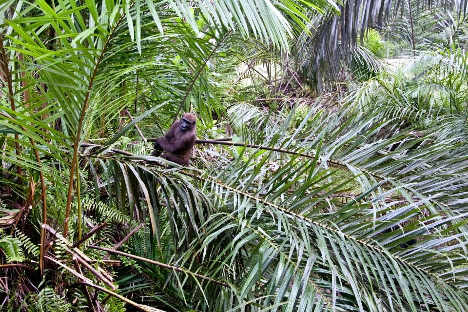 , The equatorial forest, The fauna and flora, Gabon