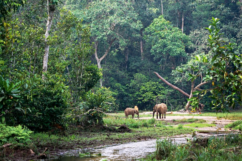 The equatorial forest of Gabon, The equatorial forest, The fauna and flora, Gabon