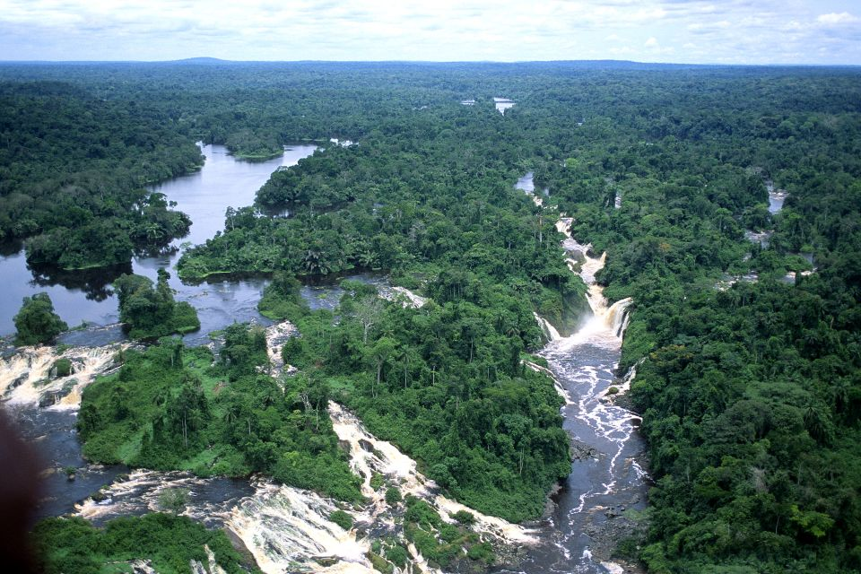 The equatorial forest, The fauna and flora, Gabon