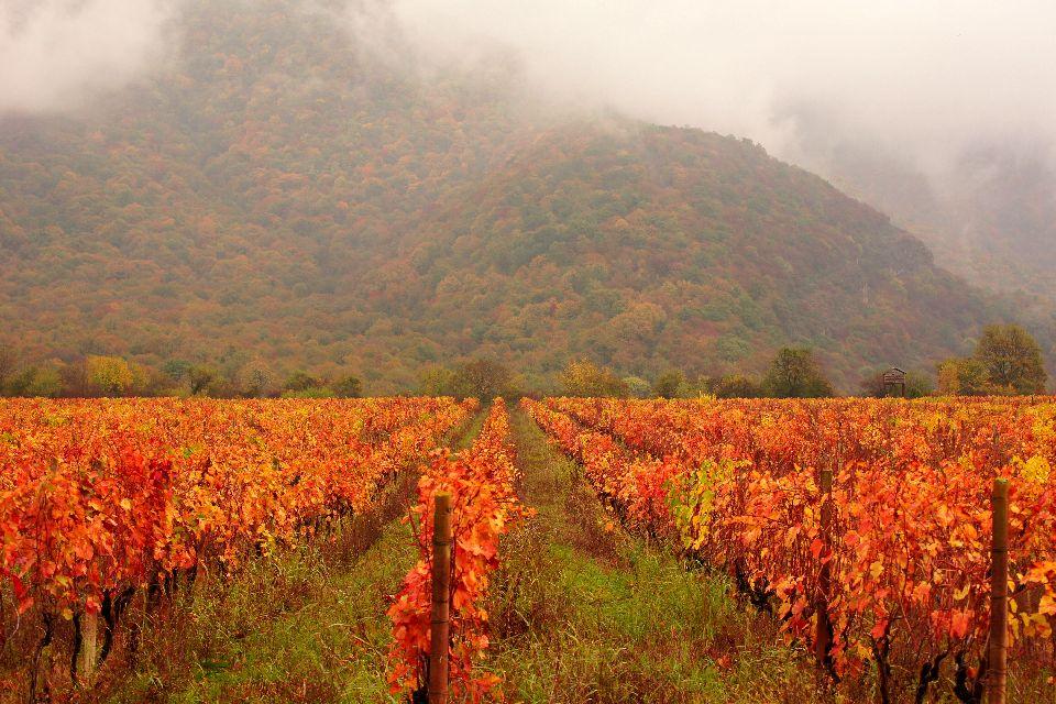 Le vignoble de Kakheti , Géorgie