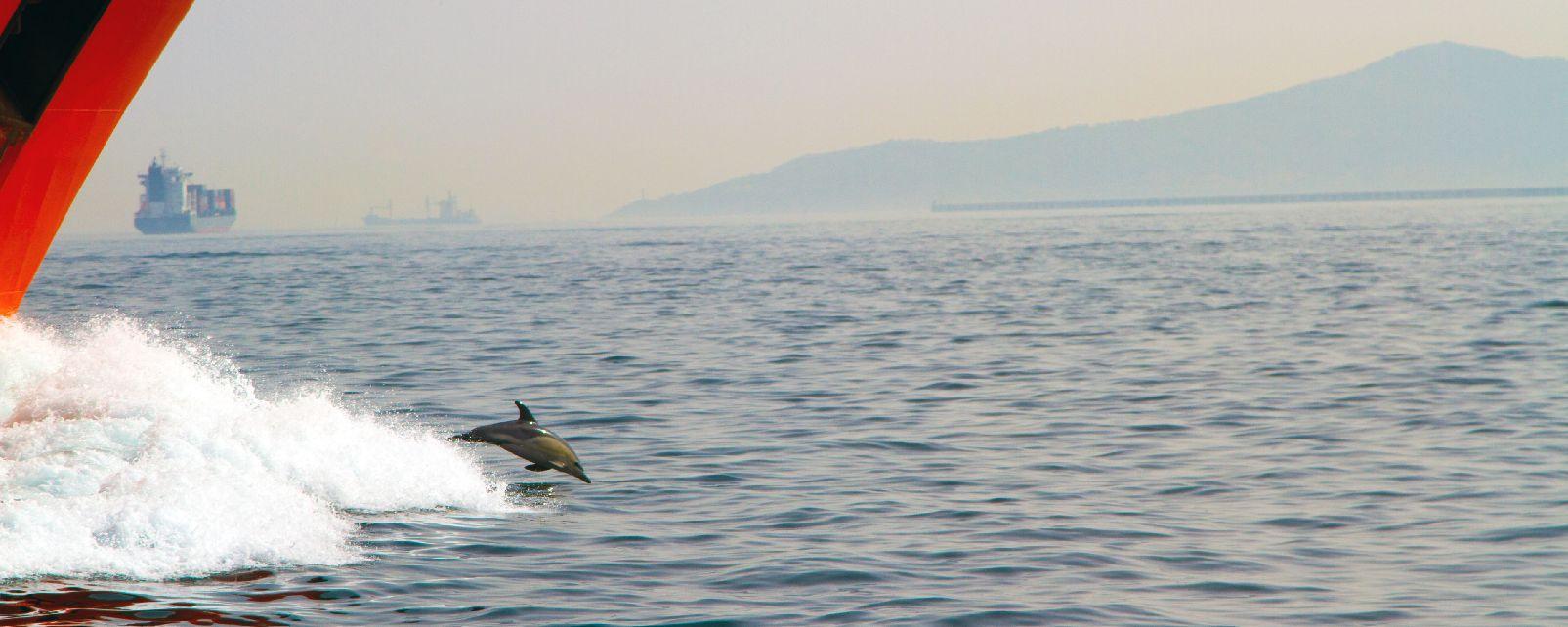 Les dauphins , Gibraltar
