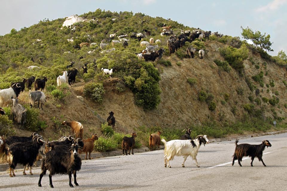 La Macédoine et la Chalcidique , La péninsule de Sithonia , Grèce