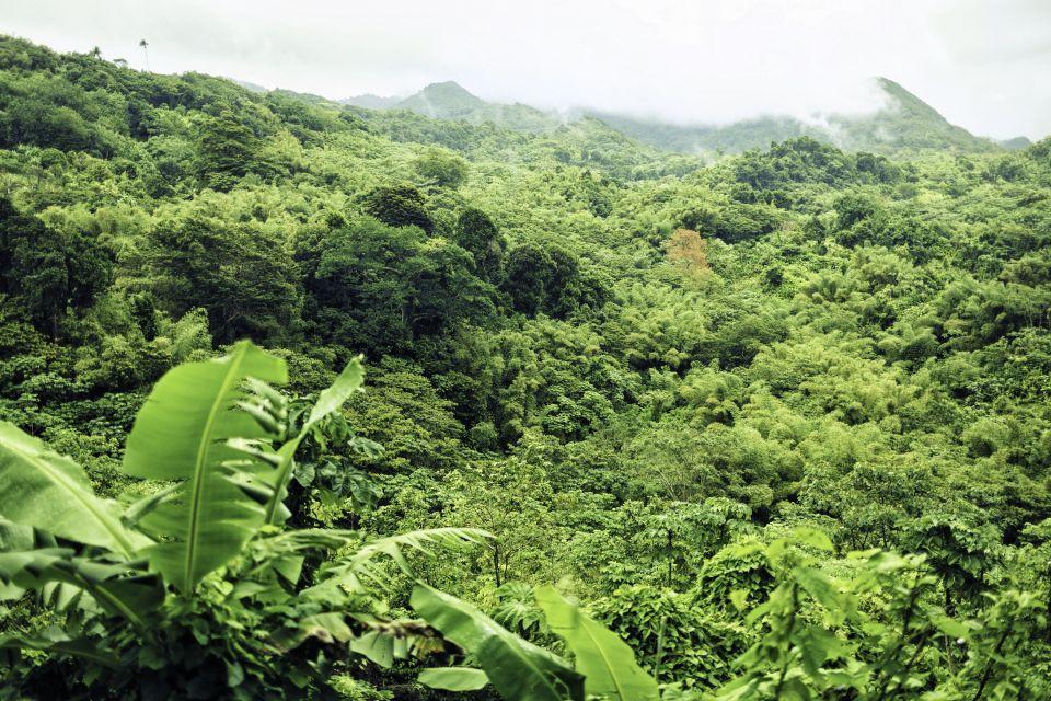 Les paysages, grenade, caraïbes, Antilles, amérique, amérique du nord, montagne, forêt, tropicale, végétation, flore