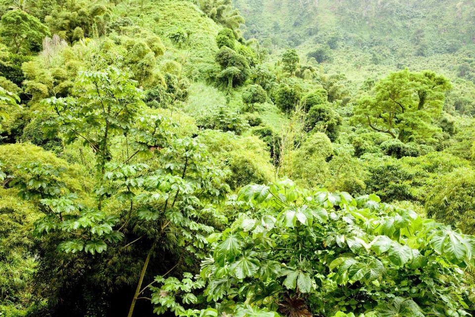 Les paysages, grenade, caraïbes, Antilles, amérique, amérique du nord, montagne, forêt tropicale