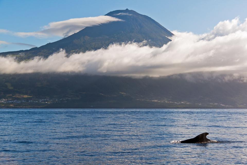 Sea mamals , Sea mammals, the Azores , Portugal