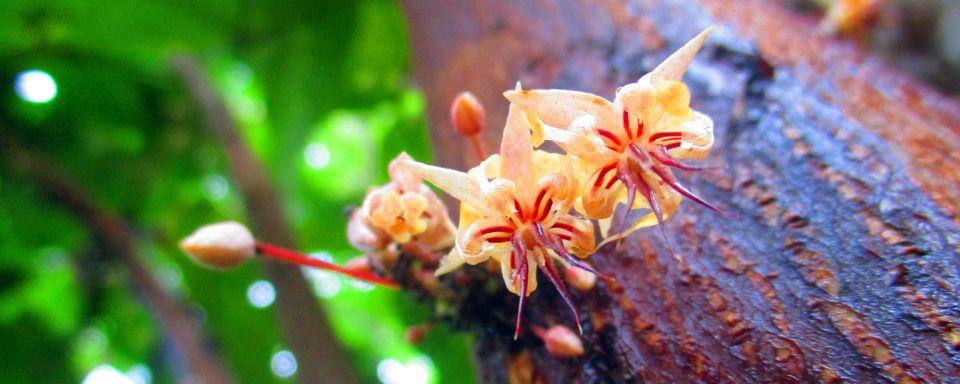 La flora en la isla de Granada