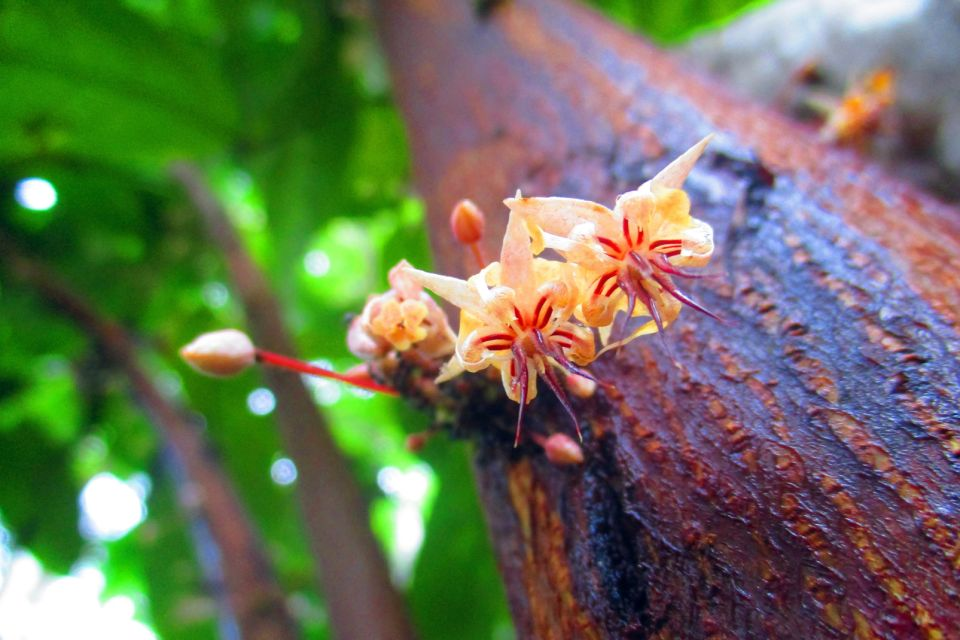 The flora on Grenada island, Flora, The fauna and flora, Grenada