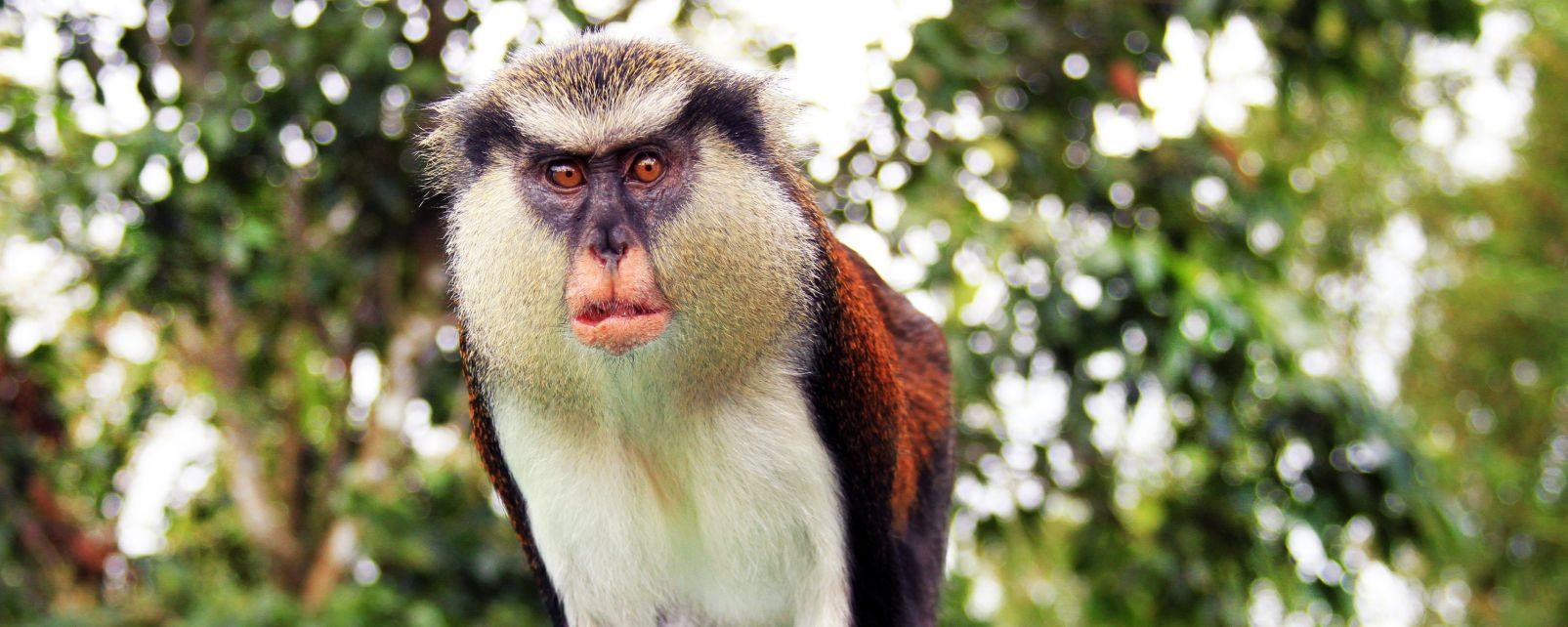 Grand Etang Forest Centre, Das Reservat von Grand Etang, Die Fauna und Flora, Grenada