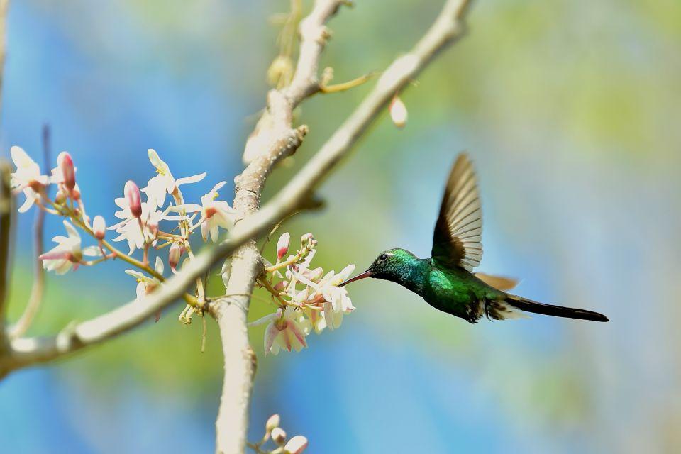 La faune et la flore, grenade, caraïbes, Antilles, amérique, amérique du nord, faune, animal, grand étang, réserve, colibri, oiseau