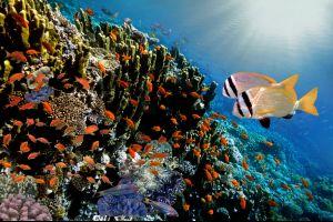 La fauna submarina, Fauna y flora, Granada