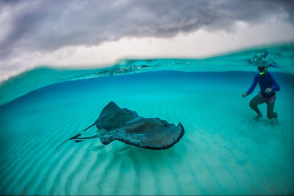 La faune et la flore, Antilles, Caraïbes, mer, poisson, sous-marin, plongée, amérique, grenade, plongeur, raie