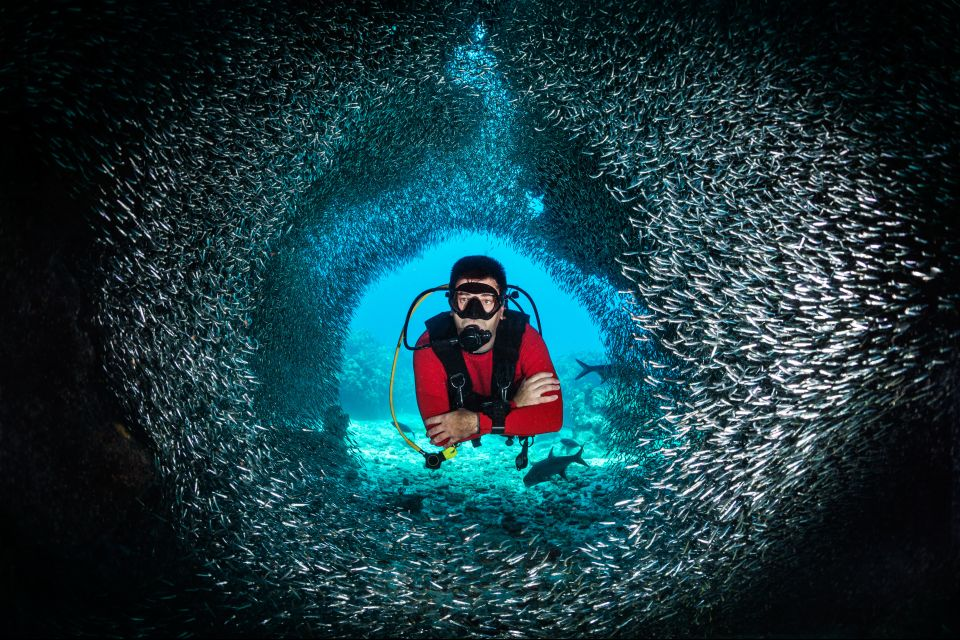 La faune et la flore, Antilles, Caraïbes, mer, poisson, sous-marin, plongée, amérique, grenade, plongeur