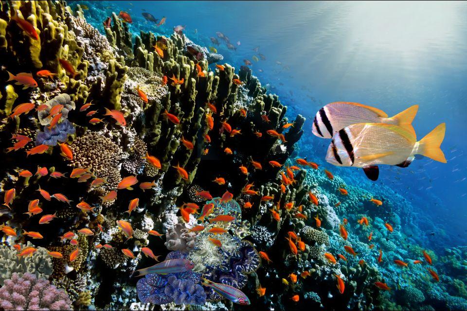 La faune et la flore, Antilles, Caraïbes, mer, poisson, sous-marin, plongée, amérique, grenade