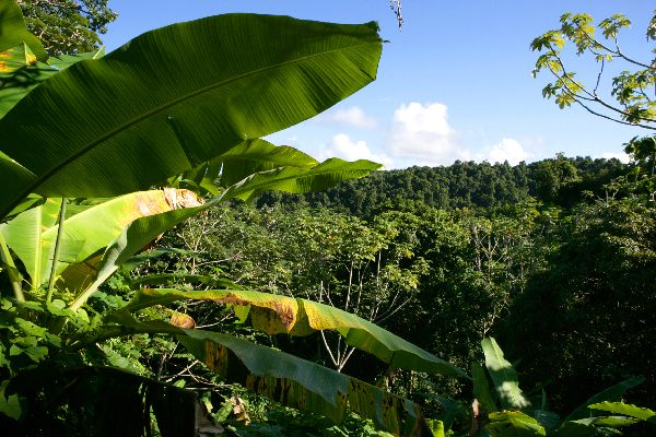 The National Park of Guadeloupe , The national park , The islands of Guadeloupe
