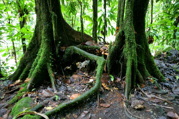 The National Park of Guadeloupe , The park's flora , The islands of Guadeloupe