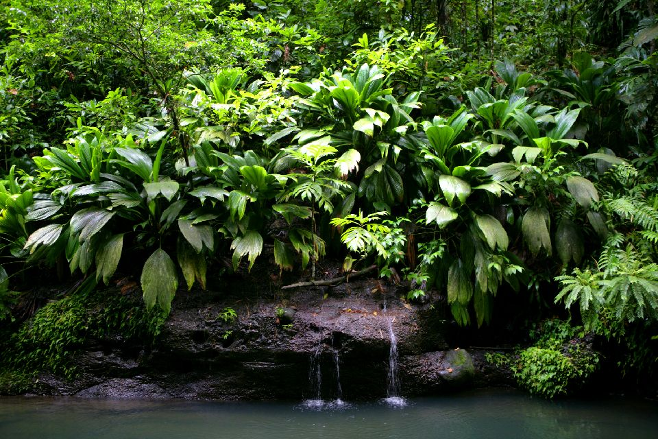 The National Park of Guadeloupe , The vegetation in the national park , The islands of Guadeloupe