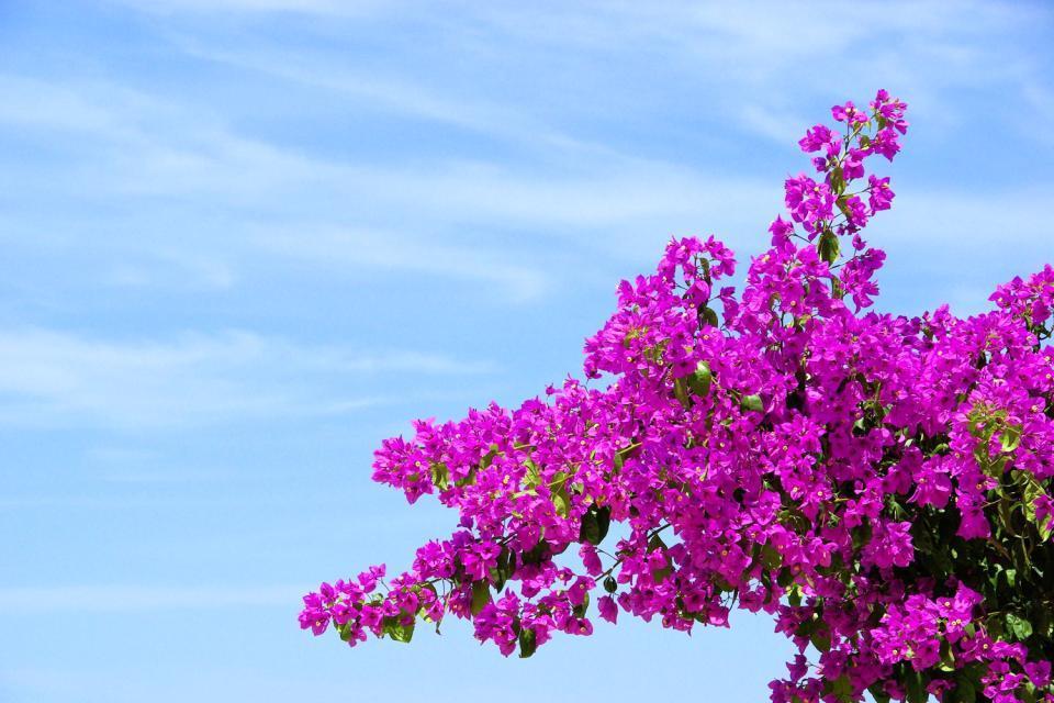 La flore , Guadeloupe