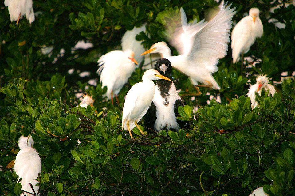 La faune et la flore, flore, végétation, mangrove, palétuvier, nature, antilles, guadeloupe, caraïbes, oiseau, faune