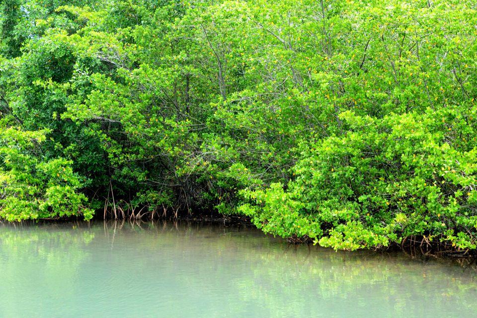 La mangrove, La faune et la flore, La Guadeloupe