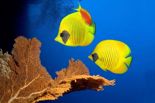 Underwater, Undersea beds, The fauna and flora, Guadelupe