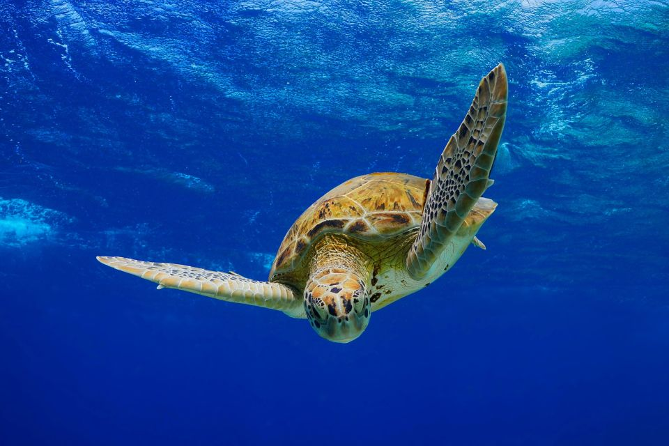 A sea turtle, Undersea beds, The fauna and flora, Guadelupe
