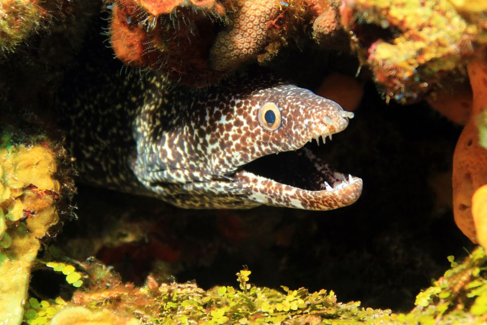 A moray eel, Undersea beds, The fauna and flora, Guadelupe